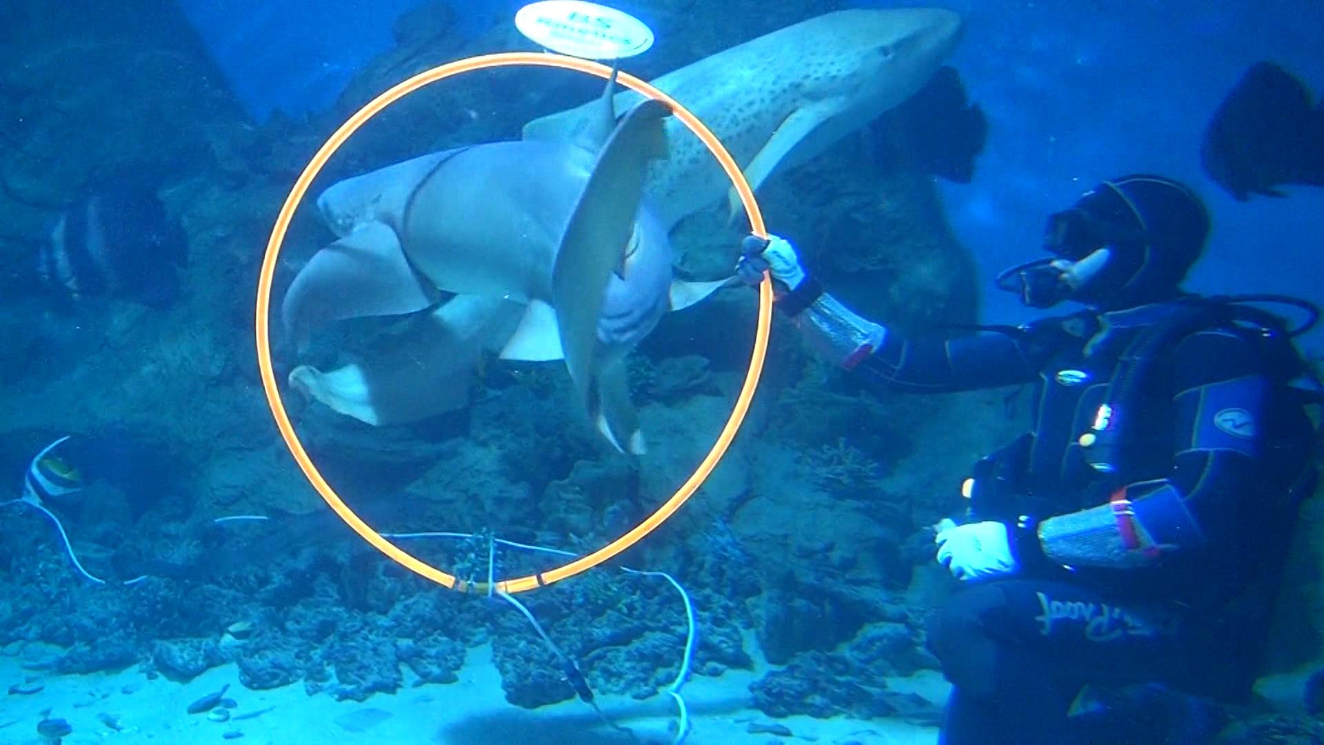 Акулы & SCUBATLON