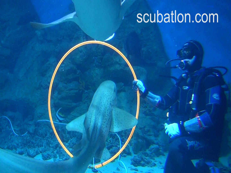 Акулы и СКУБАТЛОН