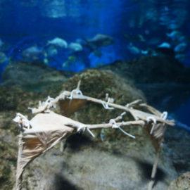 Restore coral reefs