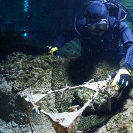 Восстановление рифов